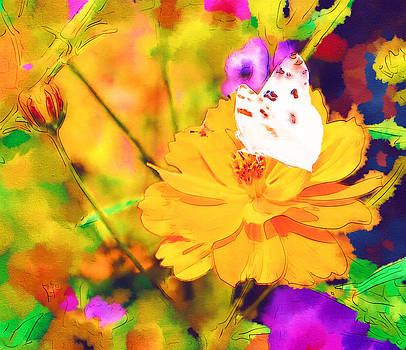 Cindy Nunn - White Checkered Butterfly 2