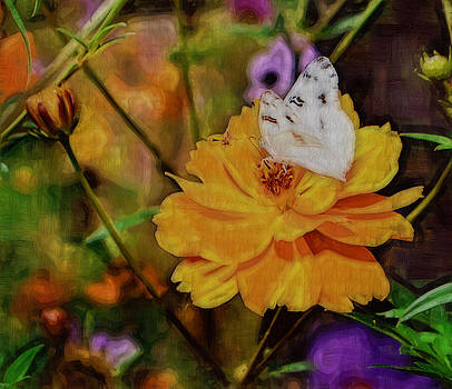 Cindy Nunn - White Checkered Butterfly 3