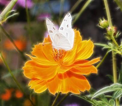 Cindy Nunn - White Checkered Butterfly 9