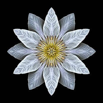 White Clematis Flower Mandala by David J Bookbinder