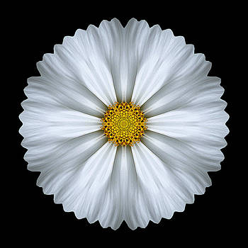 White Cosmos Flower Mandala by David J Bookbinder