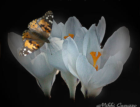 White Crocus with Monarch Butterfly by Mikki Cucuzzo