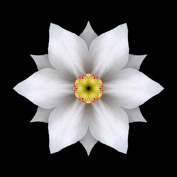 White Daffodil II Flower Mandala by David J Bookbinder