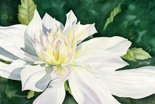 White Dahlia - transparent watercolor by Elena Polozova