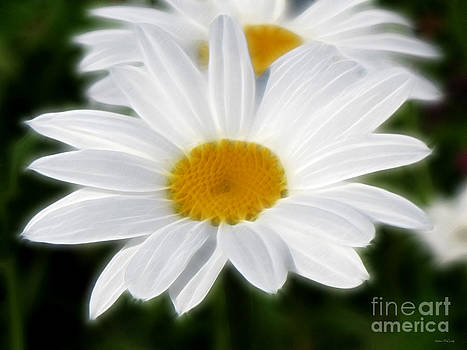 White Daisies by Kathie McCurdy