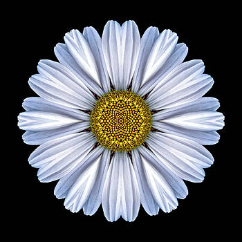 White Daisy Flower Mandala by David J Bookbinder