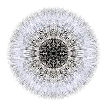 Dandelion Head I Flower Mandala White by David J Bookbinder