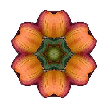 Daylily I Flower Mandala White by David J Bookbinder