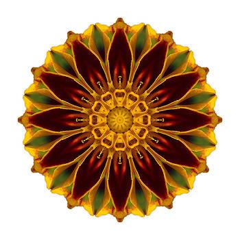 Deep Orange Marigold V Flower Mandala White by David J Bookbinder