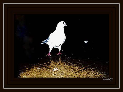 White Dove by YoMamaBird Rhonda