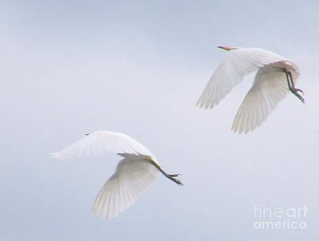 White Egrets in Synchrony by Rory Ivey