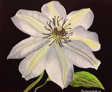 White flower by Anthony Masterjoseph