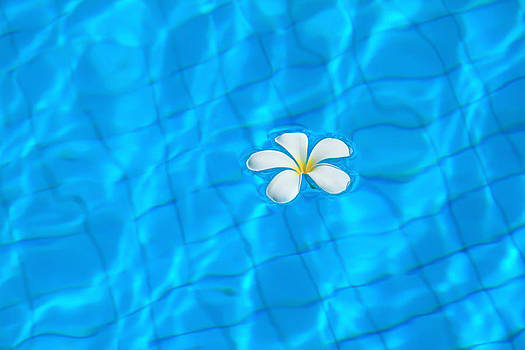 White flowers and pool. by Suphakit Wongsanit
