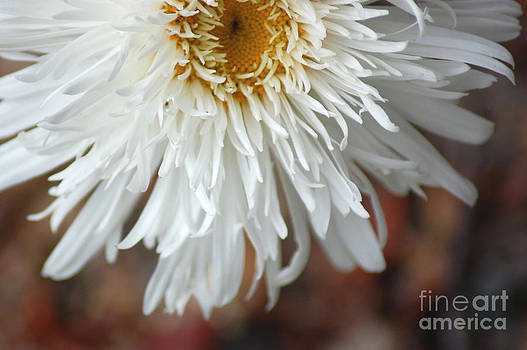 White Flowers by Donna Bentley