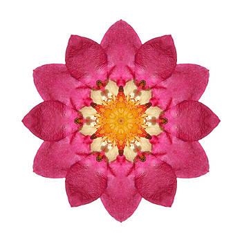 Fragaria Pink Panda I Flower Mandala White by David J Bookbinder