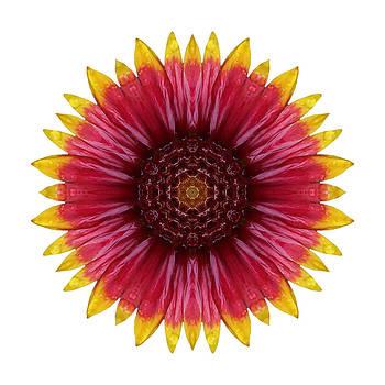 Galliardia Arizona Sun I Flower Mandala White by David J Bookbinder