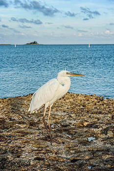White Heron by Kelley Nelson