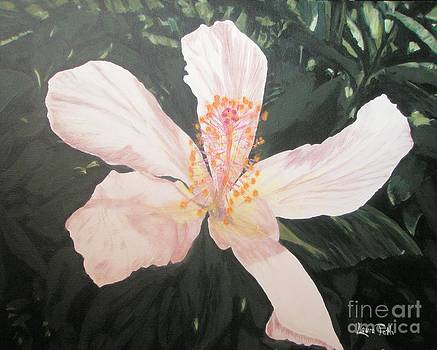 White Hibiscus in Acrylic by Laura Toth