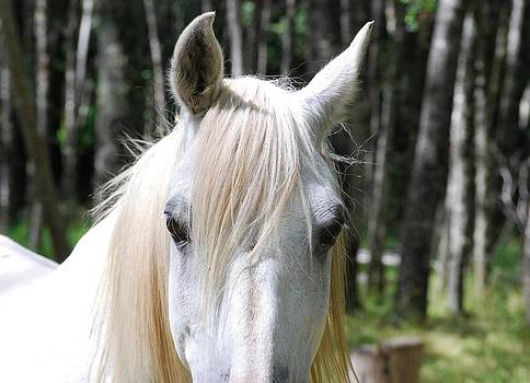 White horse close up by Jocelyn Friis
