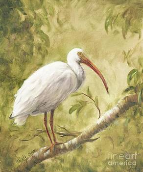 White Ibis by Glenda Cason