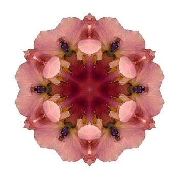 Iris Germanica I Flower Mandala White by David J Bookbinder