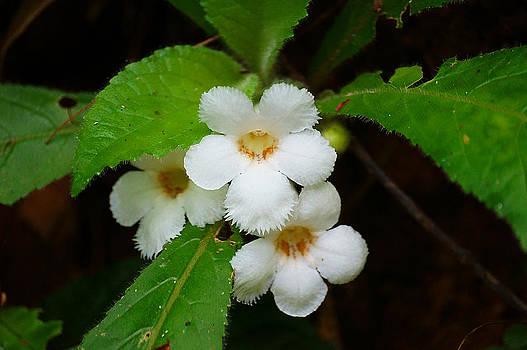 White Jungle Wildflower by Blair Wainman