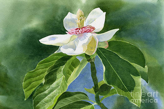 Sharon Freeman - White Magnolia