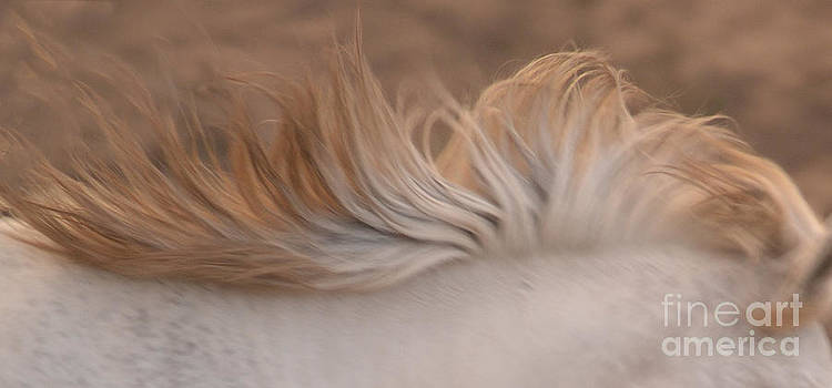 Heather Kirk - White Mare Mane Number One Close Up Panoramic Muted