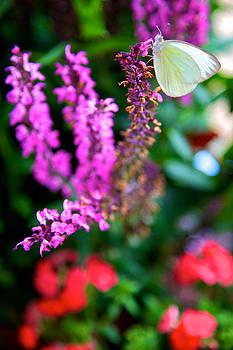 White Moth by Joe Urbz