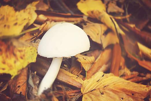 White Mushroom by Kathleen Stevens Moore