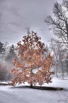 White Oak in Fog by Ed Cilley