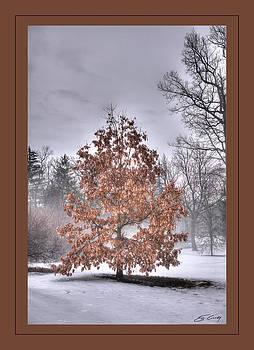 White Oak in Fog  Framed by Ed Cilley
