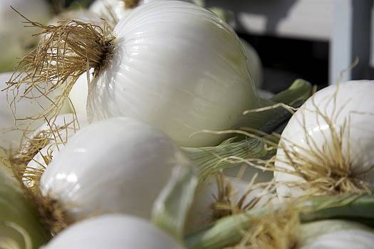 White Onions by Terry Horstman
