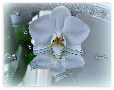 White Orchid by Cissa  Larsson