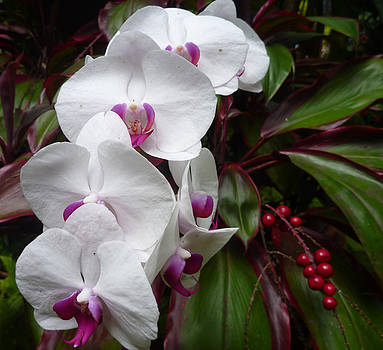 White Orchids and Red Berries by Mark L Watson