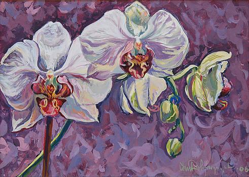 White orchids by Christine Lytwynczuk