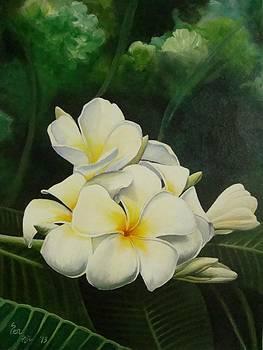 White Paradise by Pravin  Sen