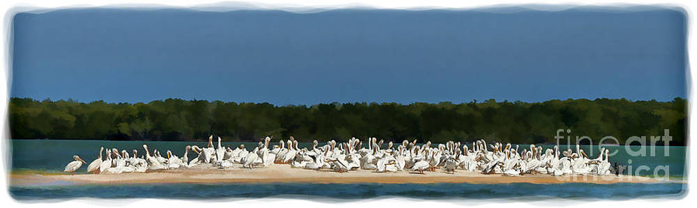 Dan Friend - White pelicans on sand island in Everglades