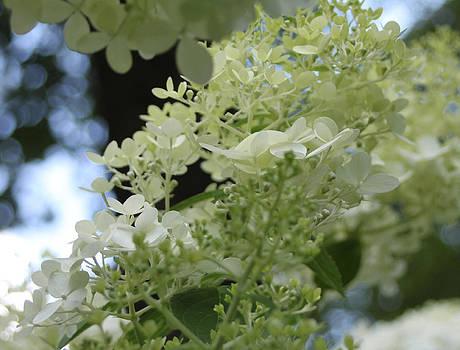 White Petals by Debra Pruskowski