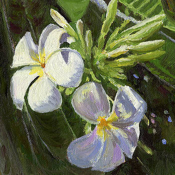 Stacy Vosberg - White Plumeria