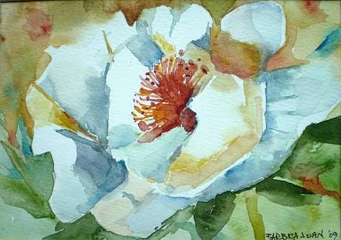 White Poppy by Barbra Joan