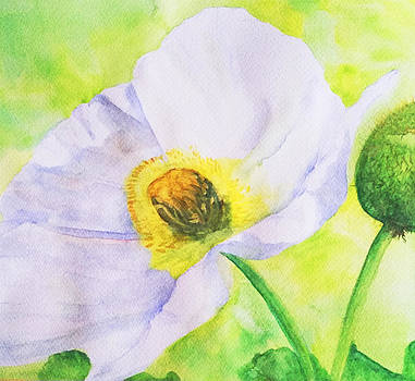 White Poppy by Louise Grant