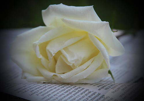 White Rose And Newspaper by Cathy Lindsey