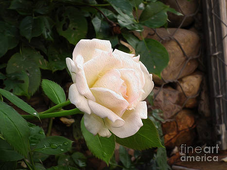 White Rose Green Oleo by Stefano Piccini