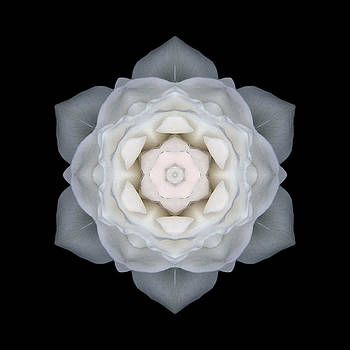 White Rose I Flower Mandala by David J Bookbinder
