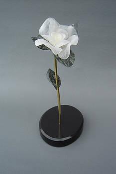 White Rose by Leslie Dycke