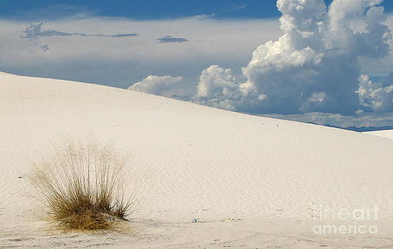 Marilyn Smith - White Sands Blue and White Beauty