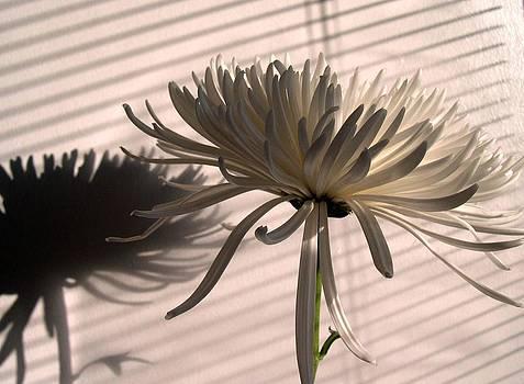 White Shadows by Gilda Pontbriand