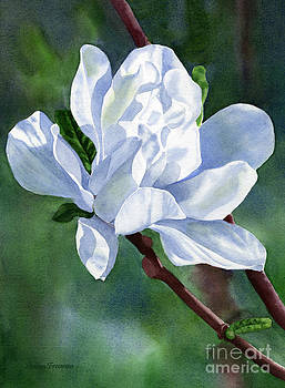 Sharon Freeman - White Star Magnolia Blossom with Background