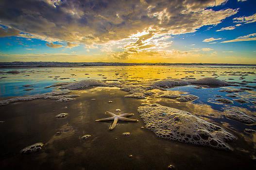 White Starfish at Sunrise by DM Photography- Dan Mongosa